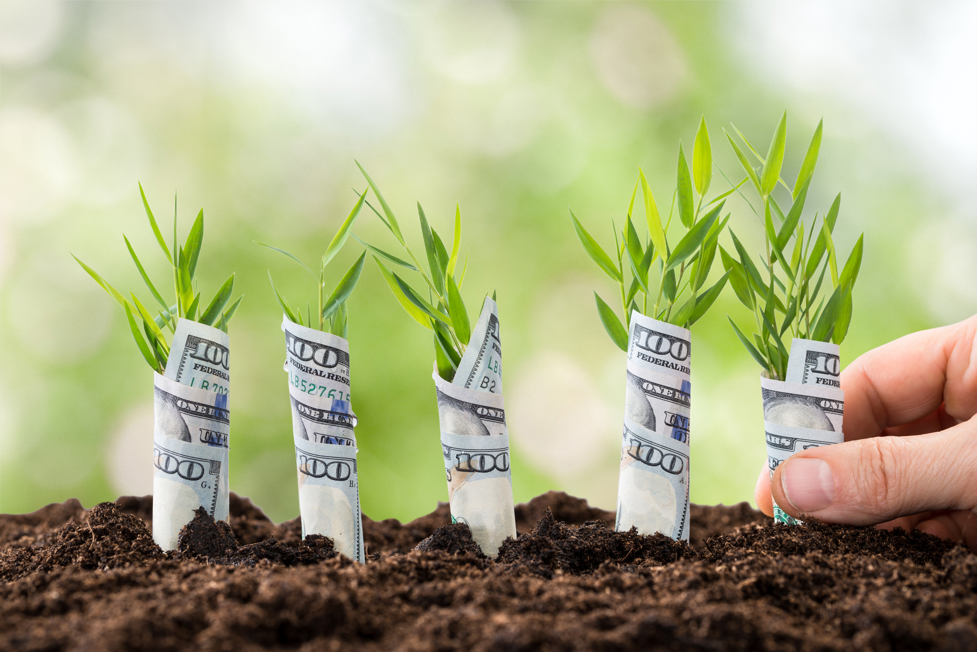 Person Planting Money Plants