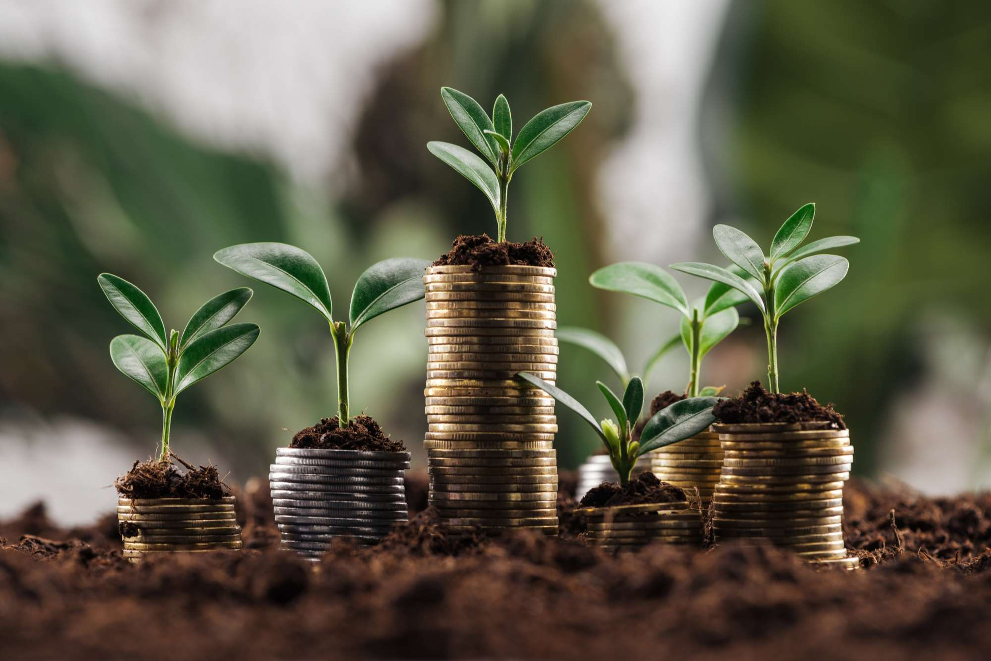 Get Ready to Maximize Your Return on Investment (1)